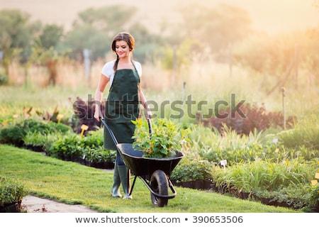 Kadın el arabası bitkiler çiçek kadın gülen Stok fotoğraf © IS2