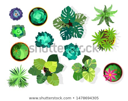 Stok fotoğraf: Top View Vector Collection Of Flowers In Pot
