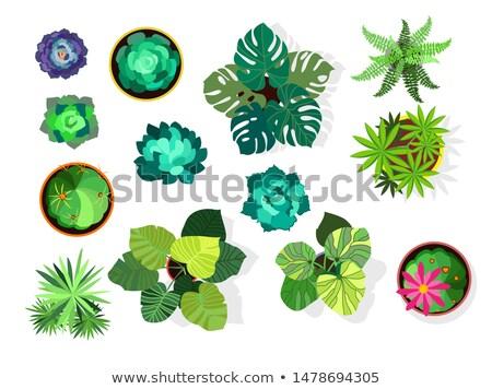 Сток-фото: Top · мнение · вектора · коллекция · цветы · банка