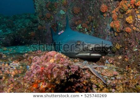piranha · tengeri · ragadozó · fehér · tenger · hal - stock fotó © rogistok