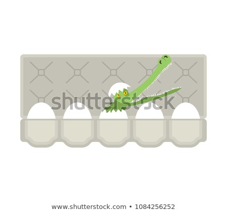 Packing eggs hatched crocodile isolated. Vector illustration Stock photo © popaukropa