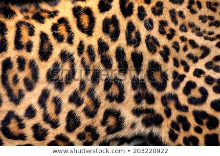 Leopárd bőr textúra nyomtatott haj háttér Stock fotó © SArts