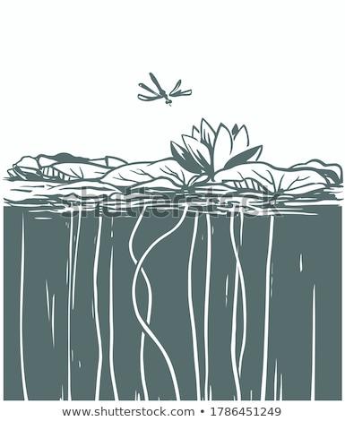 verde · água · superfície · da · água · cópia · espaço · natureza - foto stock © boggy