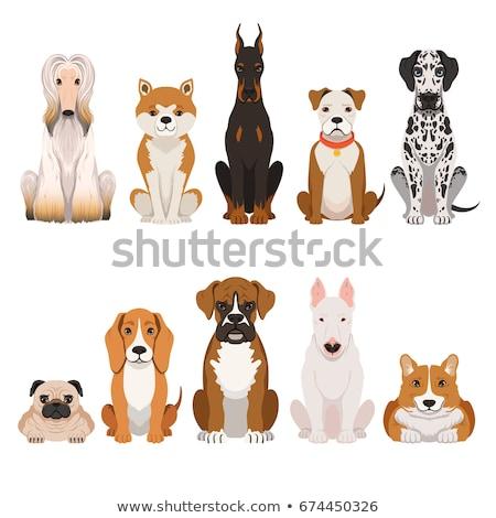 гончая собаки талисман коллекция икона иллюстрация Сток-фото © patrimonio