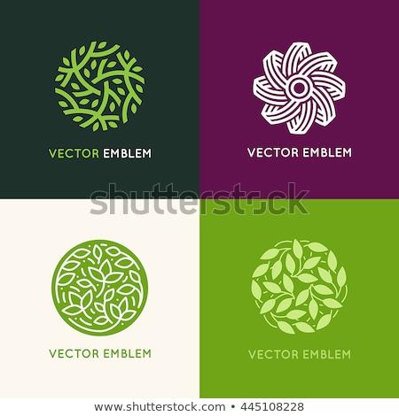 green eco leaves circle logo symbol element sign Stock photo © blaskorizov