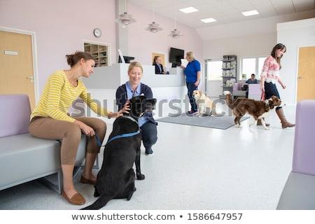 állatorvosi klinika recepció vár emberek vektor Stock fotó © robuart