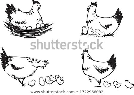 Kicsi csirke tojás csőr illusztráció természet Stock fotó © colematt