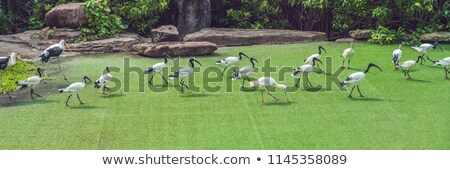 Fauna selva exótico tropicales aves aves Foto stock © galitskaya