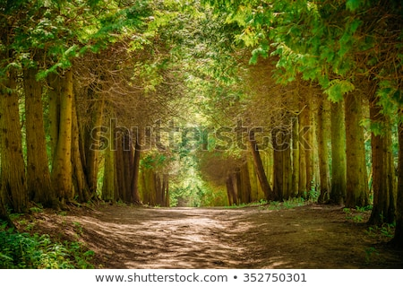 Park yaz İtalya ağaç çim Stok fotoğraf © Alex9500