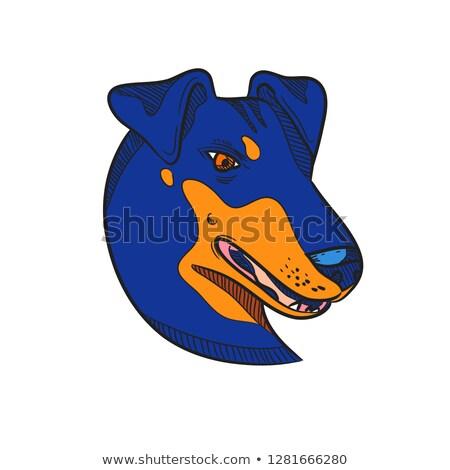 Manchester terrier kutya fej rajz szín Stock fotó © patrimonio