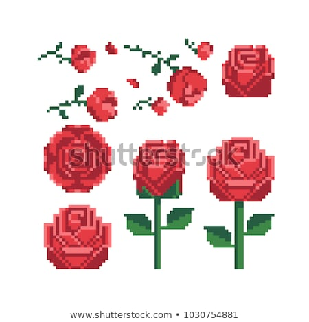 Aumentó icono flor aislado amor Foto stock © Imaagio