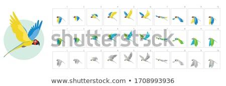 Vel vliegen papegaai spel kunst animatie Stockfoto © evgeny89