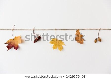 őszi levelek fonal természet évszak növénytan száraz Stock fotó © dolgachov