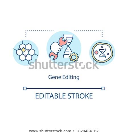 Genoma modificação vetor metáfora dna futuro Foto stock © RAStudio