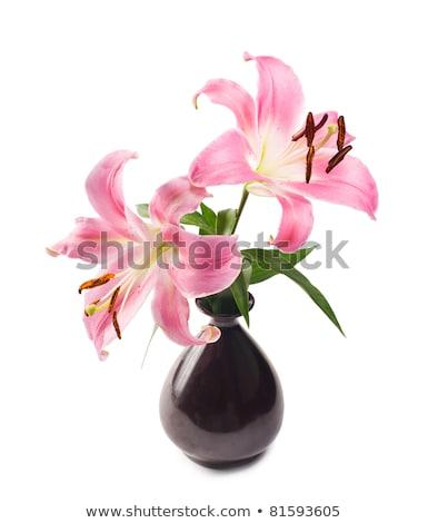 два · розовый · Лилия · изолированный · белый · цветок - Сток-фото © ansonstock