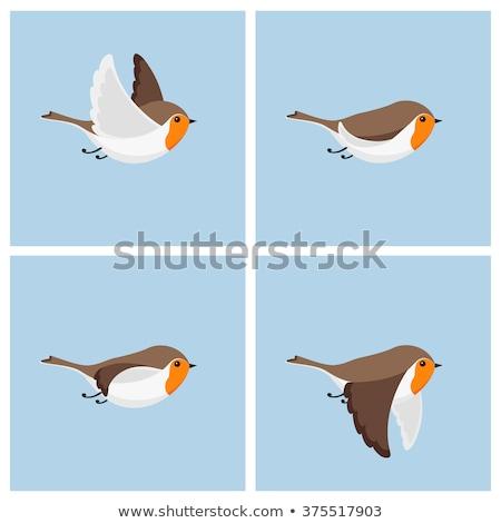 vuelo · cartoon · aves · diseno · vector · bebé - foto stock © indiwarm