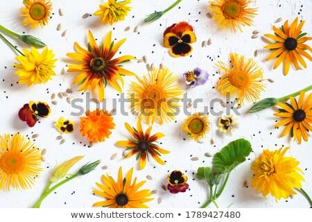 Foto stock: Jardim · vários · diferente · fotos · mulher