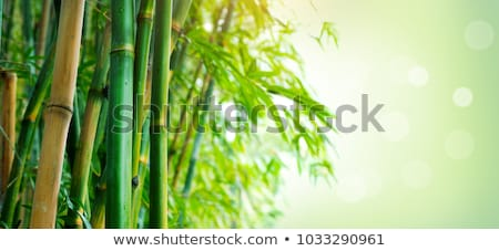 Bamboo background with copy space Stock photo © oly5