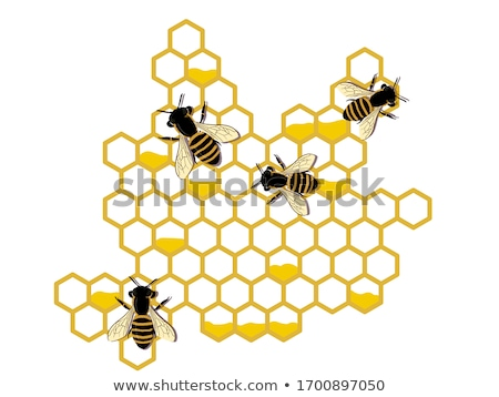 bees and beehive honey stock photo © lightsource
