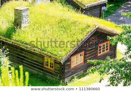 Verde telhado pitoresco amarelo Noruega Foto stock © Harlekino