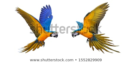 Flying parrot Stock photo © zzve