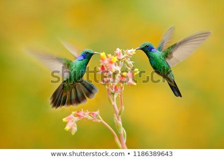 Nectar bloem foto kan zie voorjaar Stockfoto © iko