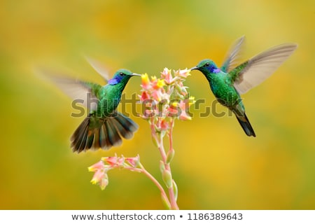 Néctar flor quadro lata ver primavera Foto stock © iko