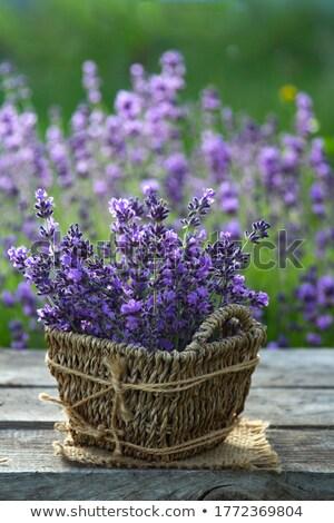 lavande · bouquet · objets · peuvent · gradient - photo stock © Concluserat