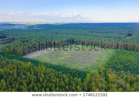 orman · vadi · ağaç · ahşap · çalışmak - stok fotoğraf © leonardi