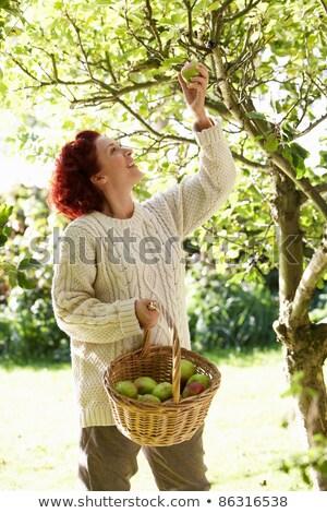 femme · panier · pommes · automne · jardin - photo stock © monkey_business