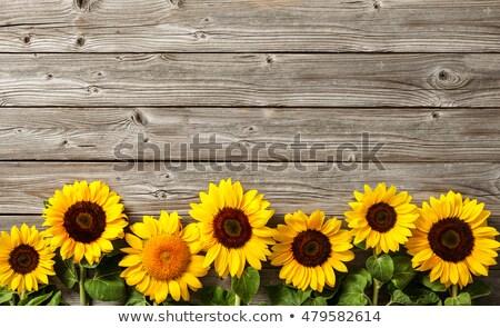 słonecznika · szczęścia · portret · cute · kobiet · bliźnięta - zdjęcia stock © marimorena
