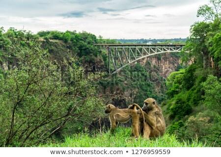 слон · Safari · Африка · смотрят · Ботсвана - Сток-фото © backyardproductions