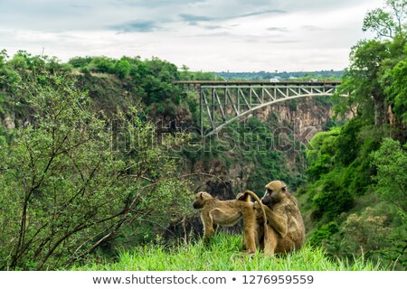 Elephant safari at Victoria Falls in Zambia Stock photo © backyardproductions