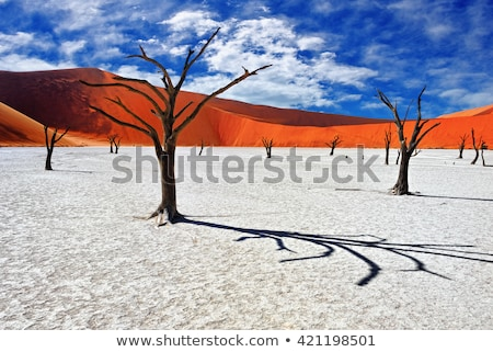 Sossusvlei Deadvlei trees, dunes stock photo © ottoduplessis