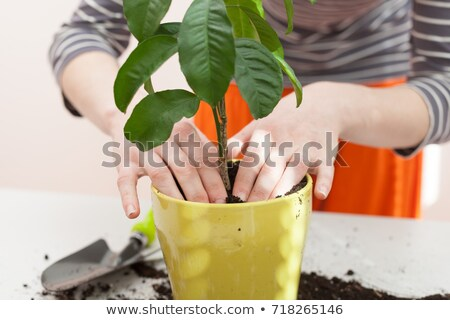 planting houseplants with gloves Stock photo © feelphotoart