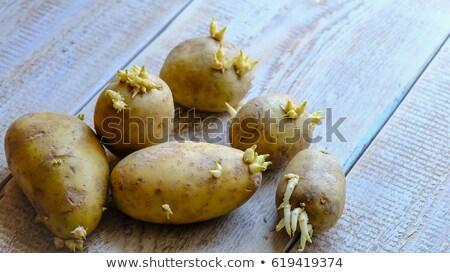groeiend · omhoog · groene · bush · veld - stockfoto © zittto