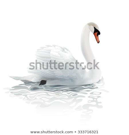 水面 自然 夏 羽毛 リラックス 湖 ストックフォト © alinbrotea