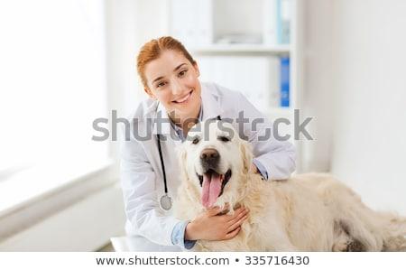 Sorridente veterinário labrador branco mulher feliz Foto stock © wavebreak_media