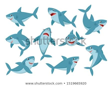 Tubarão ilustrações sorrir feliz mar vida Foto stock © meshaq2000