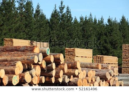 gebouw · timmerhout · bouwplaats · smal · hout - stockfoto © feverpitch