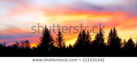 Vurig zonsondergang silhouet bos bewolkt hemel Stockfoto © Juhku