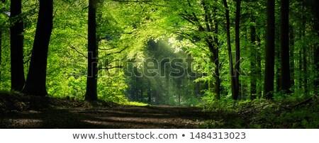 霧の パス 道路 神秘的な 緑 森林 ストックフォト © ondrej83