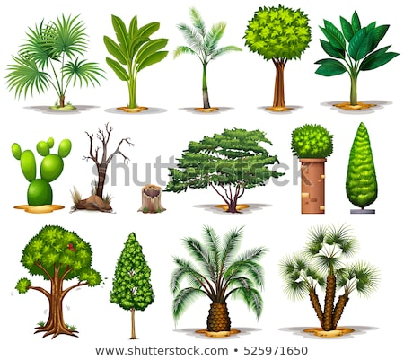 Different types of cactus plants Stock photo © bluering