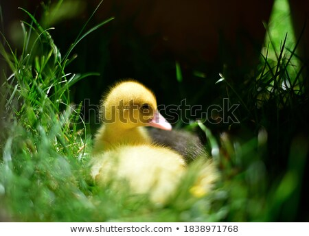 funny animals playing in the river stock photo © aminmario11