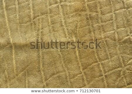 detailed elephant pelt texture Stock photo © taviphoto
