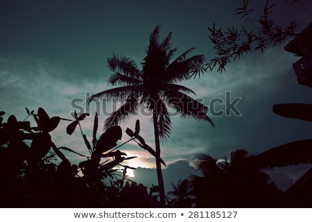 silhouette of asian exotic jungle, palms and other trees on blue Stock photo © iordani