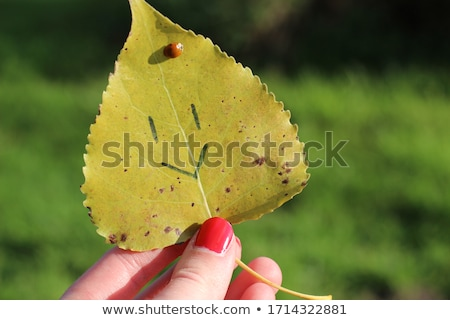 Kéz zöld levél katicabogár zöld levél növény Stock fotó © orensila