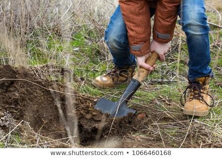 Chłopca łopata drzewo charakter roślin Zdjęcia stock © IS2