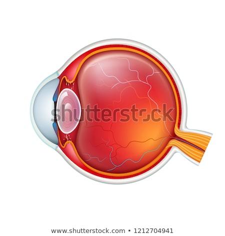 diagrama · sangue · médico · saúde · fundo - foto stock © bluering
