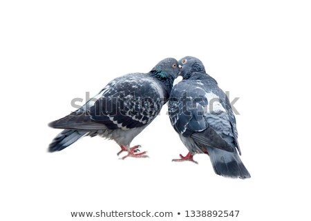 Portrait of couple with pigeons Stock photo © IS2
